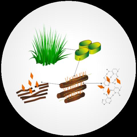 Bio Fibro Digest: attivatore enzimatico di Biocustom per la disgregazione e degradazione delle fibre in impianti a biogas